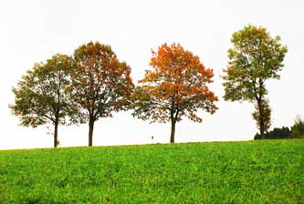 FSC Trees
