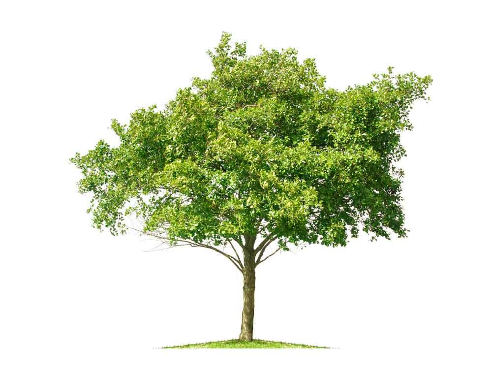 Environmental Tree